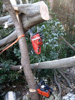 かかり木にチェンソーが挟まる