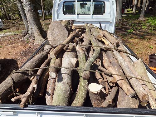 薪にする木を入手する