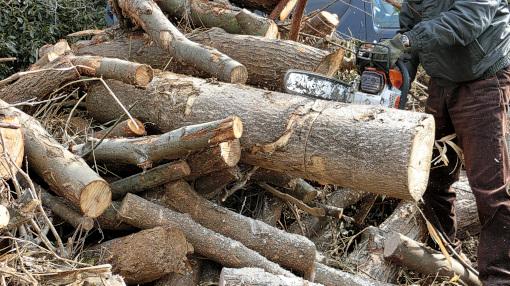 引き出した木を切る