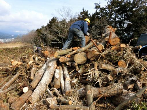 山積みされている木