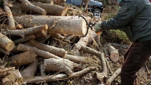 木を横に引き出す