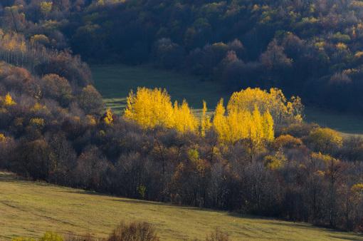 黄葉する木々