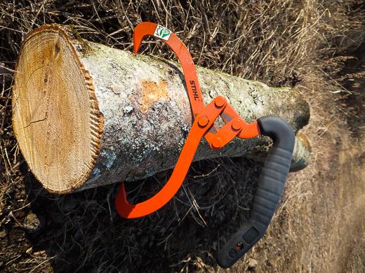 切ったケヤキの枝