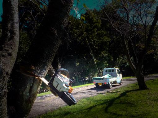 軽トラックで枝にロープをかけて引く