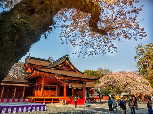 斜めに伸びる桜の枝