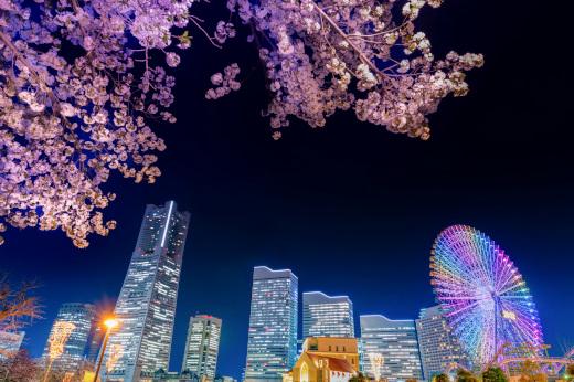 都会の夜桜と夜景