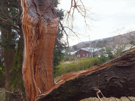 折れた桜の木の部分